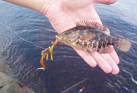 черви для рыбной ловли