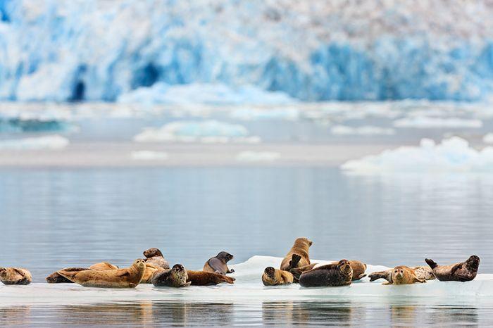 Фотографии Аляски