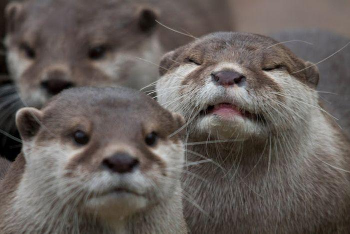 Животные фотобомбы (35 фото)