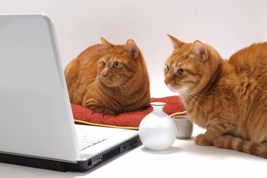 Google создали самообучающуюся компьютерную сеть, которая научилась распознавать кошек