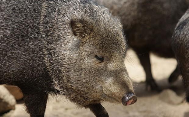 Удивительные животные Америки, о которых мало кто знает (11 фото). удивительное, интересное, неопознаное, животные,