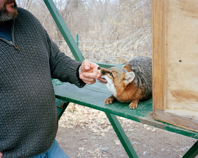 Блоги. Необычные животные в американских семьях (14 фото). необычные животные, животные в семьях
