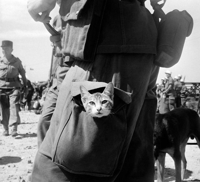 Блоги. Кошки на войне (30 фото). фото, кошки, котэ, нежно, мило