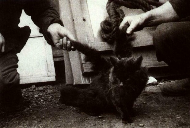 Блоги. В Китае живёт кот с крыльями (3 фото + текст). кот, крылья, кот с крыльями, мутации