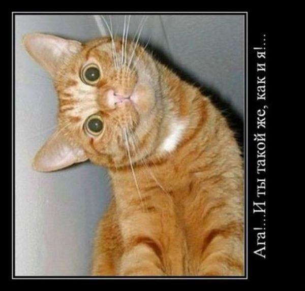 Демотиваторы. Часть 9 (33 фото). демотиваторы, смешно, интересно, картинки в черном