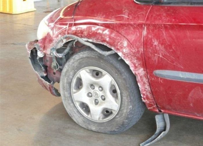 Блоги. Что может сделать бультерьер с вашей машиной (3 фото). бультерьер, машина, котенок