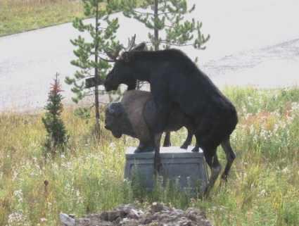 5 странных историй о хулиганских выходках животных