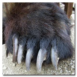 Блоги. 5 странных историй о хулиганских выходках животных (10 фото + текст). животные, проступки, интересное, удивительно