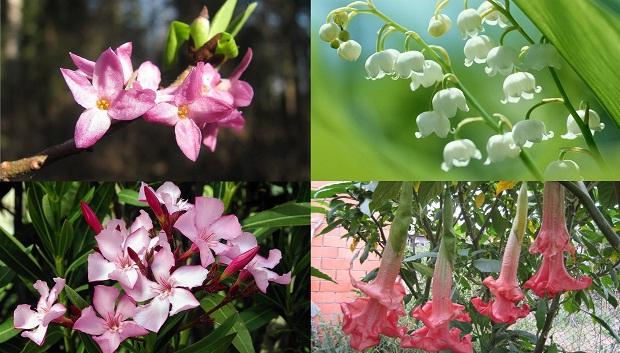 7 красивых и смертельно опасных цветов (8 фото + текст)