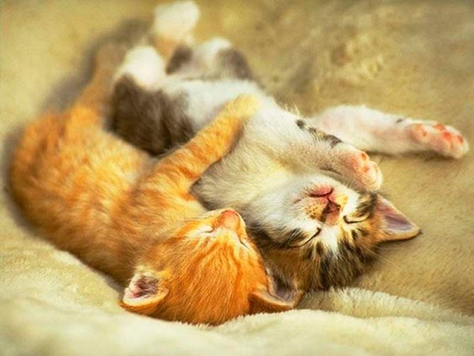 Котята обнимаются фото
