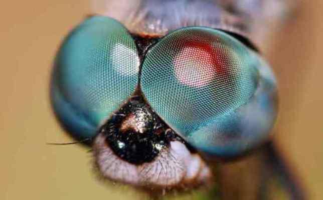 Животные с невероятными глазами (24 фото)