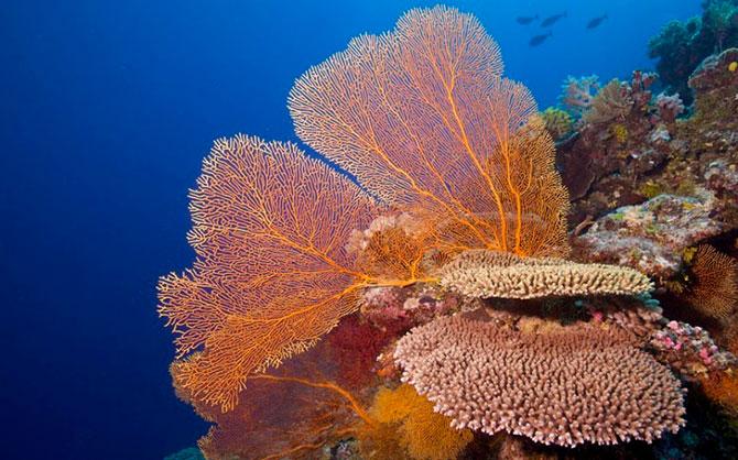 Картографирование Большого Барьерного рифа