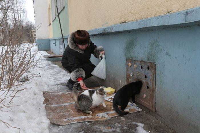 Коммунальные службы хоронят котов заживо (8 фото)