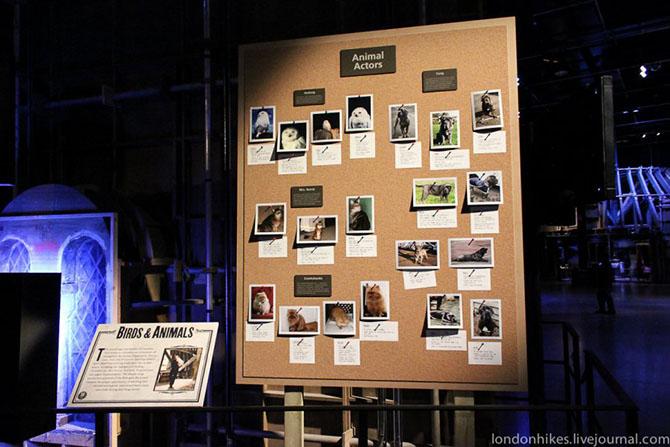 28 малоизвестных фактов о съёмках «Гарри Поттера»