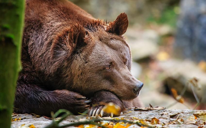 Красивые фотографии с животными