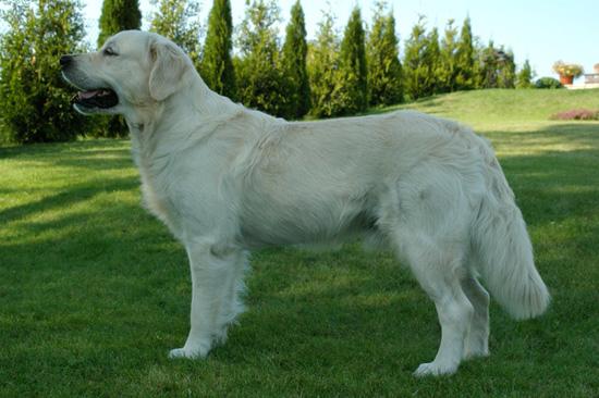 10 самых умных пород собак