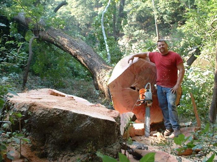 Профессия связанная с деревом
