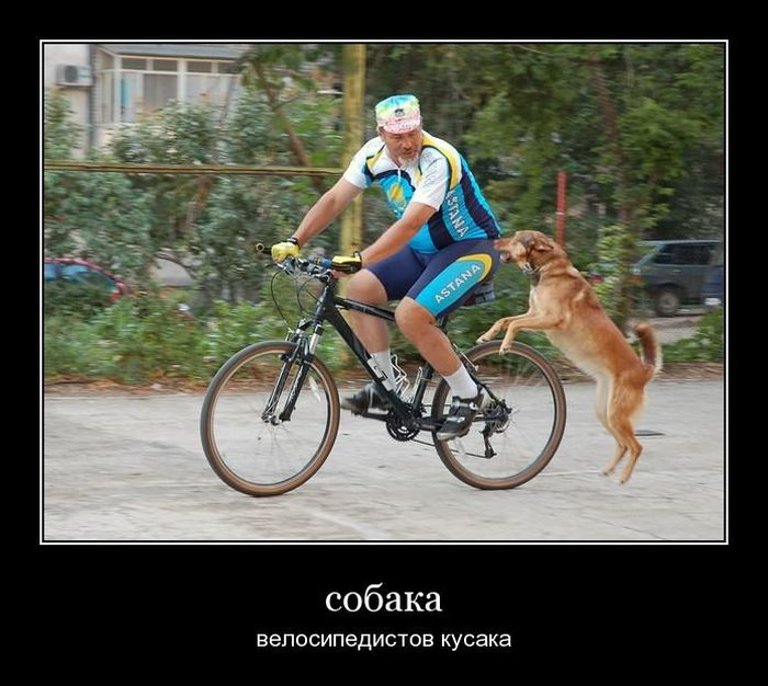 http://mainfun.ru/image/8/87/demotivatory_07.jpg