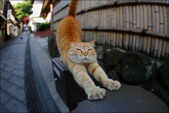 cat1 Милые коты (30 фото)