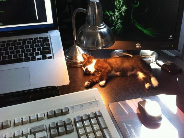 cat11 Милые коты (30 фото)