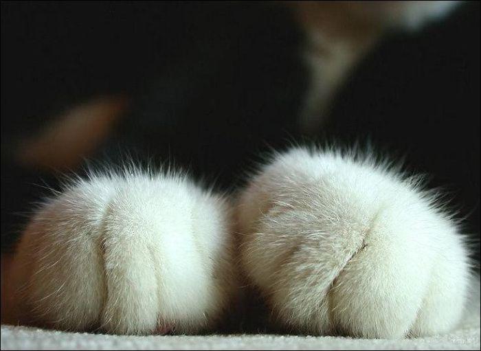 cat12 Милые коты (30 фото)