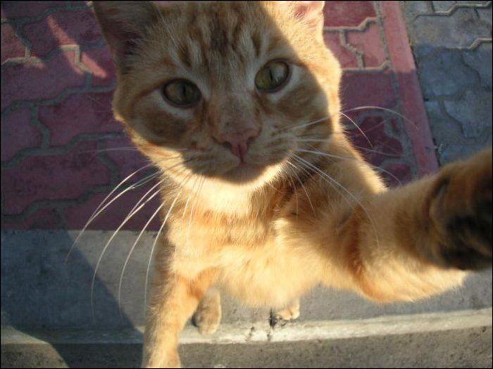 cat14 Милые коты (30 фото)