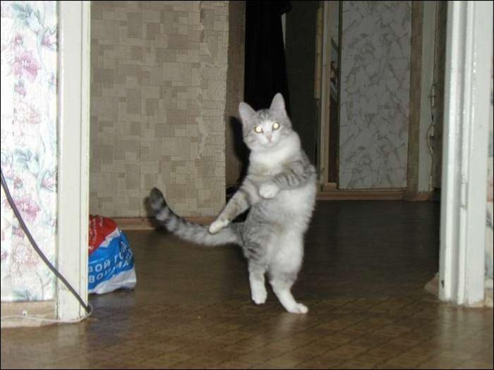 cat15 Милые коты (30 фото)