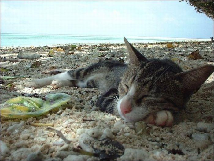 cat17 Милые коты (30 фото)