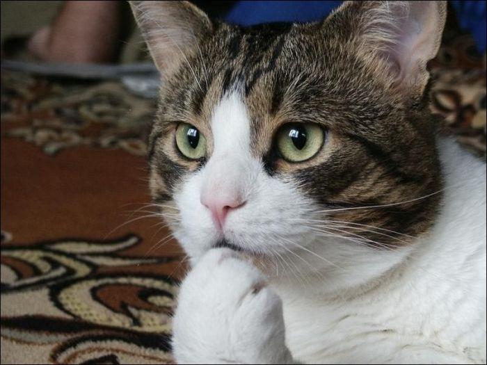 cat20 Милые коты (30 фото)