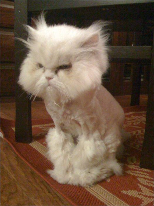 cat21 Милые коты (30 фото)