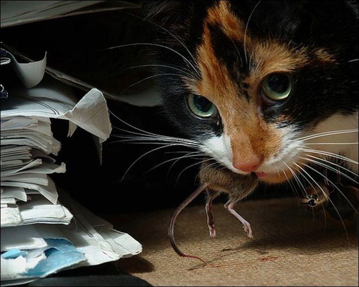 cat22 Милые коты (30 фото)