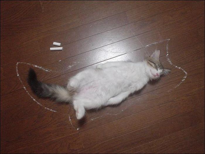 cat24 Милые коты (30 фото)