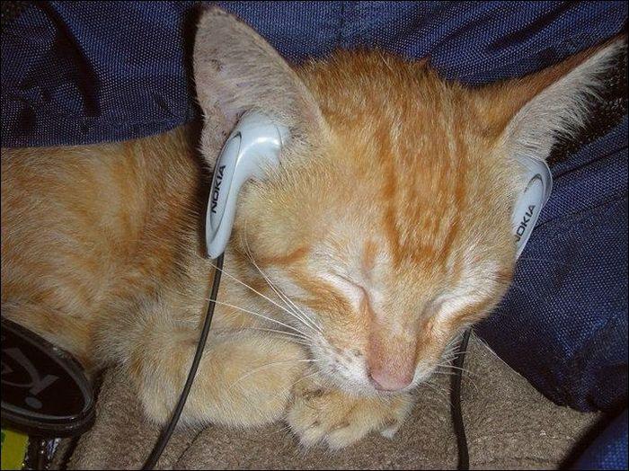 cat25 Милые коты (30 фото)