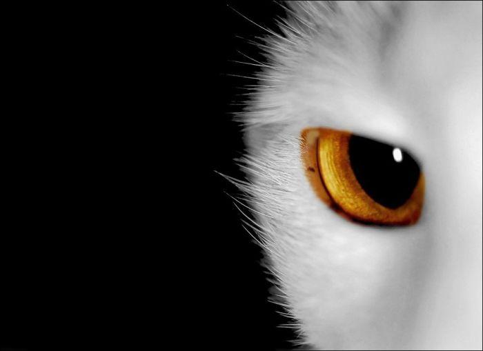 cat26 Милые коты (30 фото)