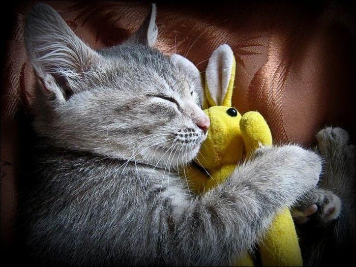cat27 Милые коты (30 фото)