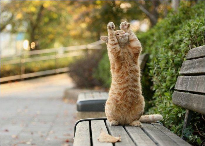 cat28 Милые коты (30 фото)
