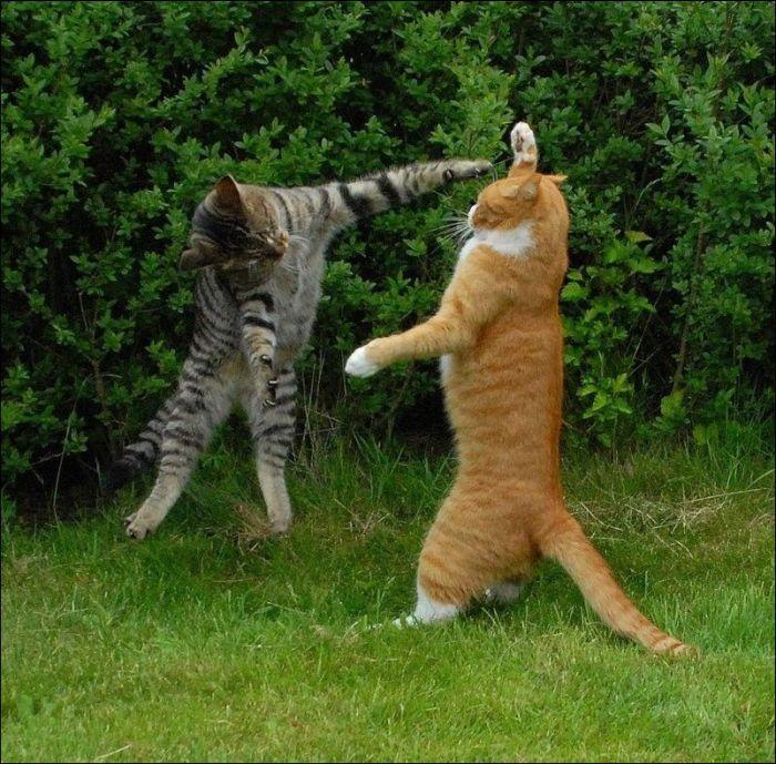 cat29 Милые коты (30 фото)