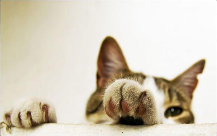 cat9 Милые коты (30 фото)