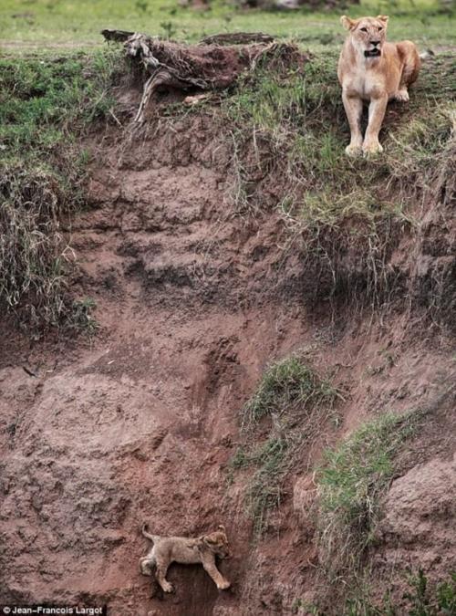 Как спасти львенка (5 фотографий), photo:1
