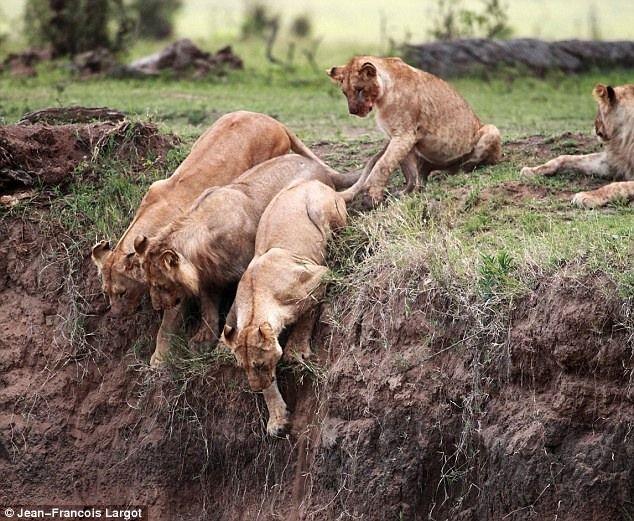 Как спасти львенка (5 фотографий), photo:2