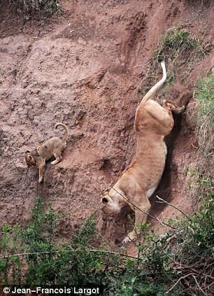Как спасти львенка (5 фотографий), photo:3