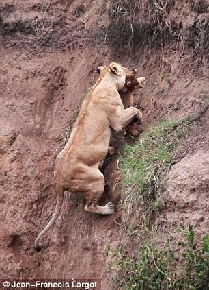 Как спасти львенка (5 фотографий), photo:4