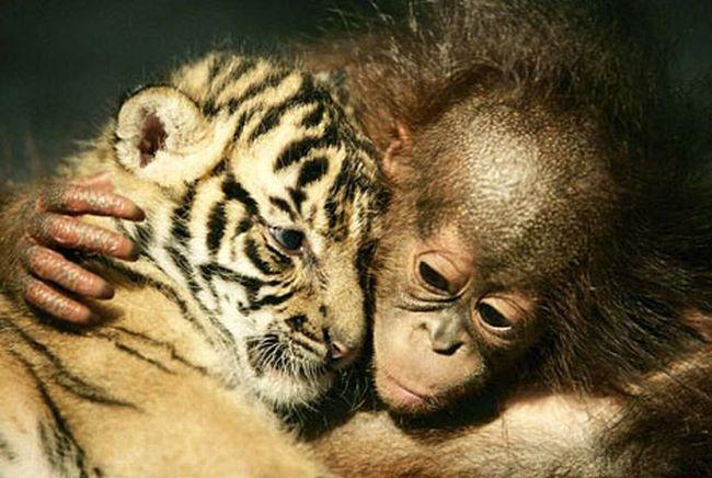 Их бросили родители, но они нашли друг друга (6 фотографий)