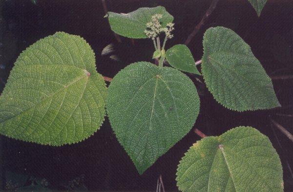 Растения, которые не стоит разводить у себя в доме