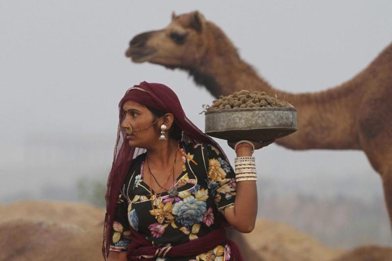 Ярмарка верблюдов в Пушкаре (17 фото)