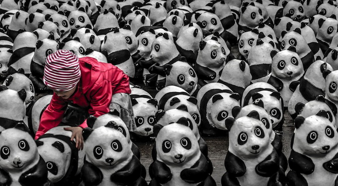 Фотоконкурс National Geographic 2013 (10 фото)