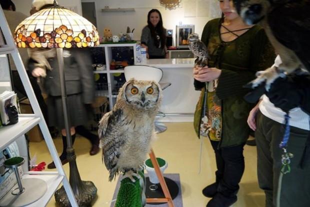 Существует Совиное кафе, где можно пообщаться с совами за обедом