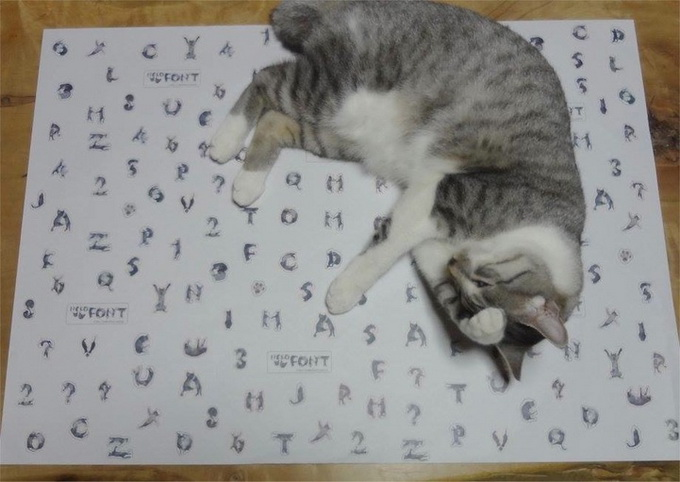 Кошачья типографика