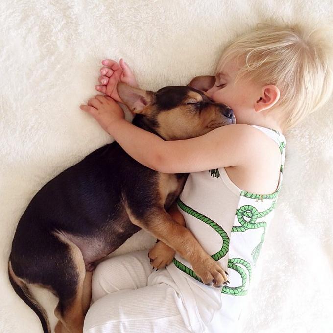 Дружба Бо и щенка Тео