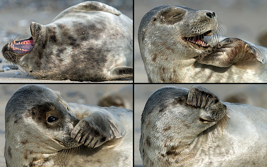 Фотографии животных за неделю (15 фото)